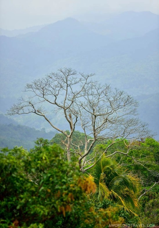 Exploring Flores - Indonesia - A World to Travel-31
