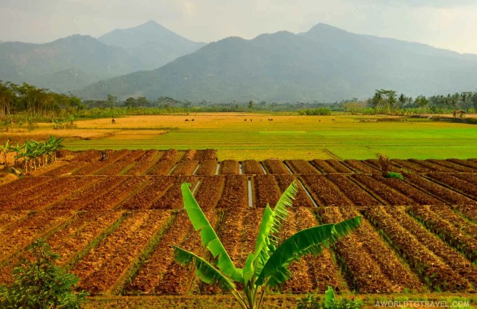 Java Island - Indonesia - A World to Travel-6
