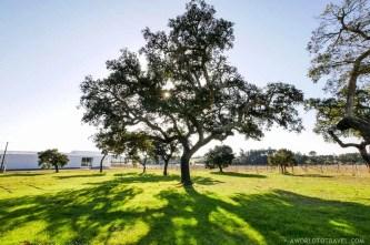 Vale das Eguas - Rota do Peixe Alentejo Portugal - A World to Travel (1)