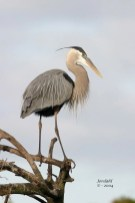 Great Blue Heron - Romantic Places to Visit in Box Elder County - A World to Travel