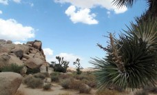 Joshua Tree - Highlights Of A South West Road Trip - A World to Travel