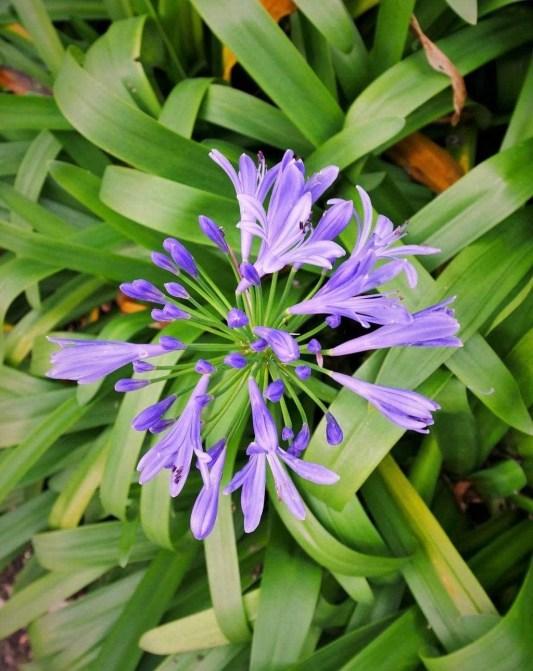 10. Atlantico Botanical Garden - Fun Things To Do In Gijon Rain or Shine - A World to Travel (4)