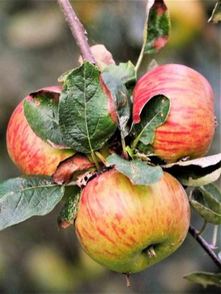 11. Llagar Piñera apples cider - Fun Things To Do In Gijon Rain or Shine - A World to Travel (1)