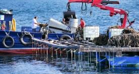 Boat ride from Combarro - Pontevedra Estuary - Terras de Pontevedra - A World to Travel (7)