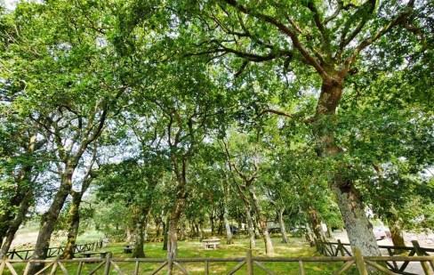 Carballeira de Cuspedriños - San Xurxo de Sacos - Cotobade - Terras de Pontevedra - A World to Travel (1)