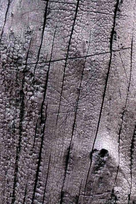 Burnt tree - Vale de Cambra - Montanhas Magicas Road Trip - Portugal - A World to Travel