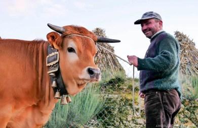 Cow at Eiras da Laje - Cinfaes - Montanhas Magicas Road Trip - Portugal - A World to Travel