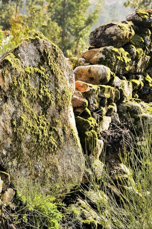 Moss - Vale de Cambra - Montanhas Magicas Road Trip - Portugal - A World to Travel