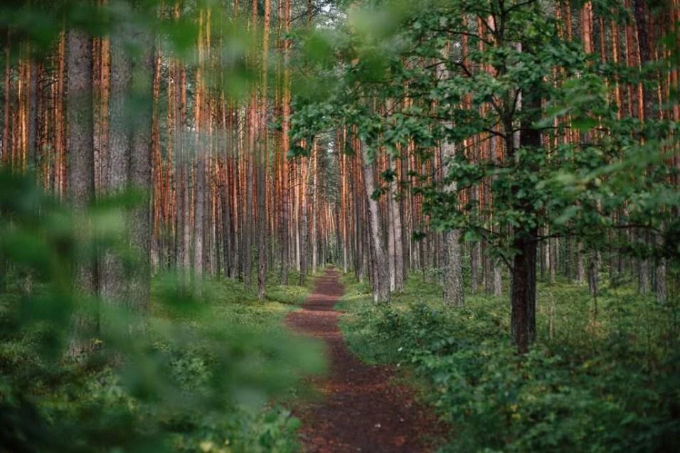 Bosque - Lituania - Road Trip por los Paises Balticos - Mapa Guia Ruta - A World to Travel