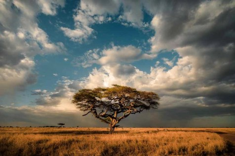 Tanzania - How To Travel Through Your Camera - Filmmaking Tips From A Travel Videographer - A World to Travel (16)