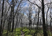 Virgina Ice - Thru Hiking The Appalachian Trail - What You Need To Know - A World to Travel