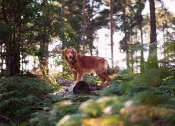 What You Need to Know About Getting an ESA - Emotional Support Animal Letter - A World to Travel (13)