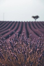 Valensole - Useful French Conversation Phrases for Travelers - A World to Travel