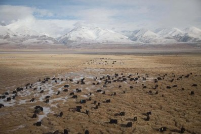Plains - Reasons Why You Should Plan a Tibet Tour - A World to Travel