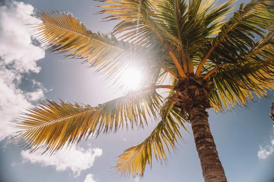 Nassau palm tree - Most Romantic Beaches In The Bahamas - A World to Travel