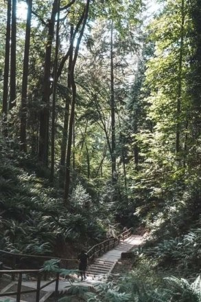 Pacific Spirit Regional Park - Best Day Hikes Around Vancouver - A World to Travel
