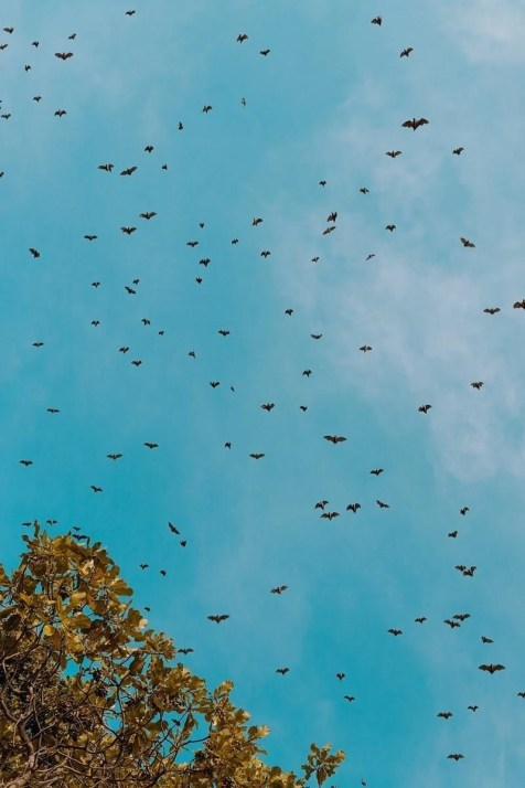 Birds - Rwanda Facts To Know Before Going And Things To See There - A World to Travel
