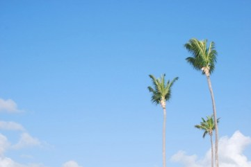 Punta Cana palm trees - Best Beaches In Dominican Republic Road Trip - A World to Travel