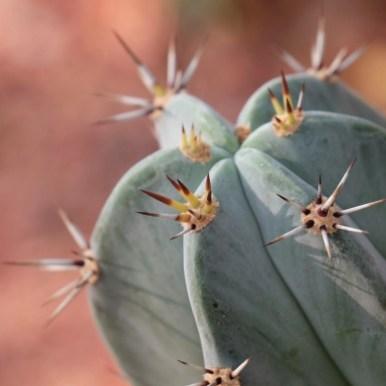 Mexican garden - Inspiring Ideas For Lovely Travel-Themed Gardens - A World to Travel (4)