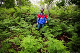 Among the fern bushes in Galicia Spain - A World to Travel