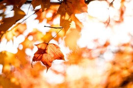 Fall leaves - places to visit in the fall - A World to Travel