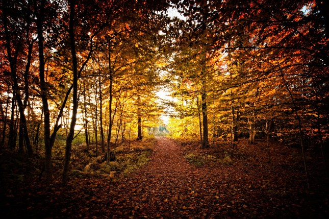 Forest foliage fall colors near me - A World to Travel