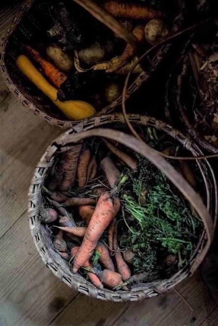 Fresh veggies of a budget vegetable garden in baskets