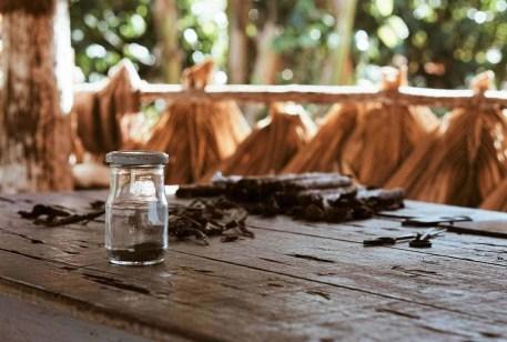 Rolling cigars in Viñales - Cuba