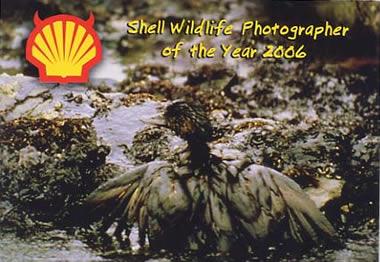Anti-Shell cartoon
