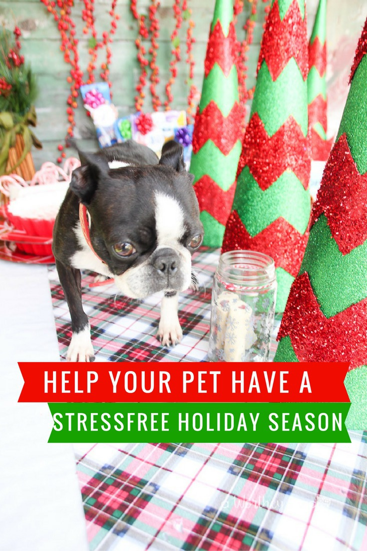Help your Dog have a Stressfree Holiday with these Dog Safety Tips