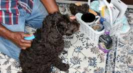 New Puppy Care Essentials