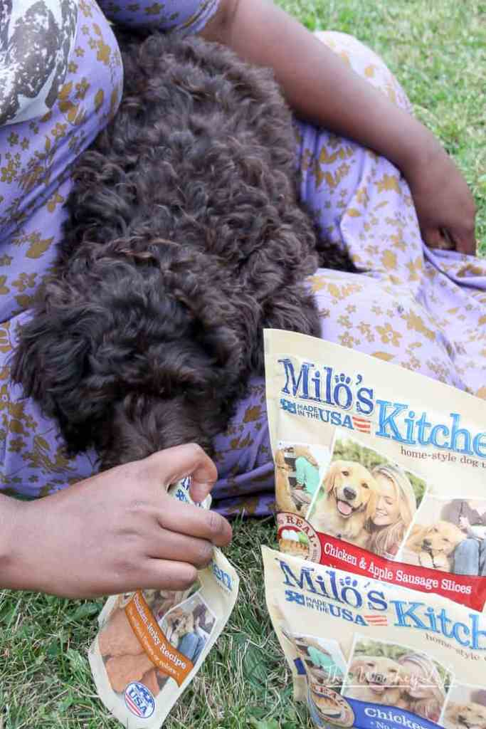 Adventures You Can Have With Your Dog To Create Bonding Time
