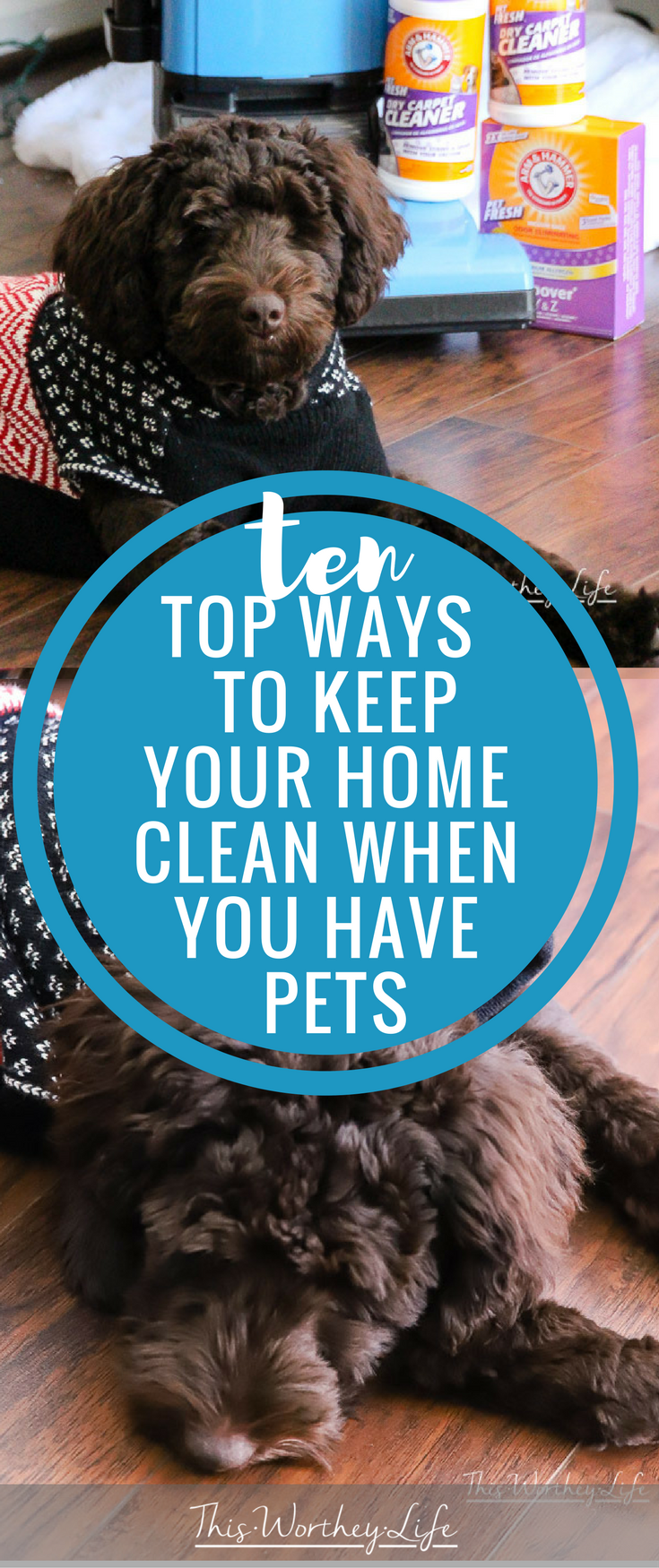 10 Top Ways To Keep Your Home Clean When You Have Pets. The holidays are here, and I'm sharing things I do to make sure my house is clean and ready to go. When you have pets, you may need to go the extra mile. Here's how I avoid doing a lot backbreaking cleaning before the holidays.