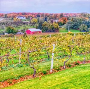 Best Things to do in Traverse City, Michigan
