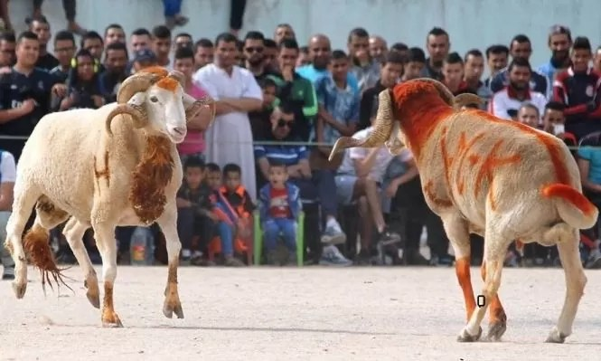 العيد الكبير علامة جزائرية مميزة