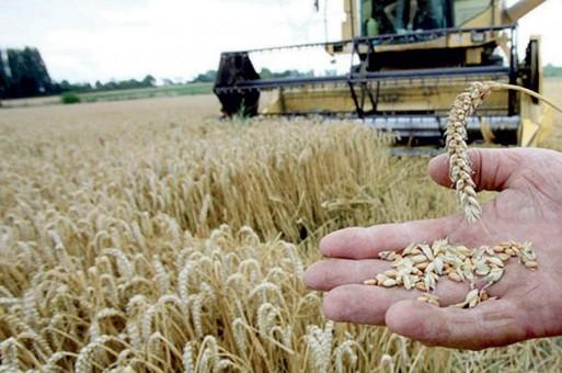 تبون يأمر بفتح تحقيق في استيراد القمح المغشوش