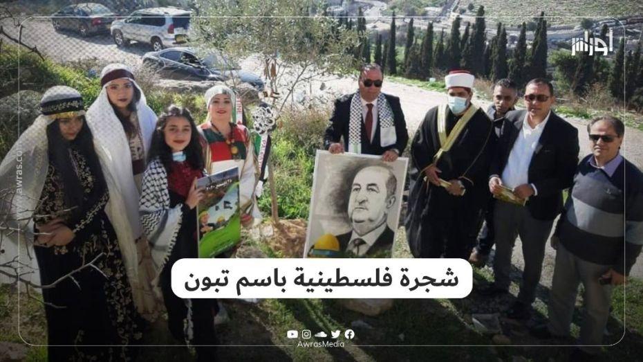 شجرة فلسطينية باسم تبون