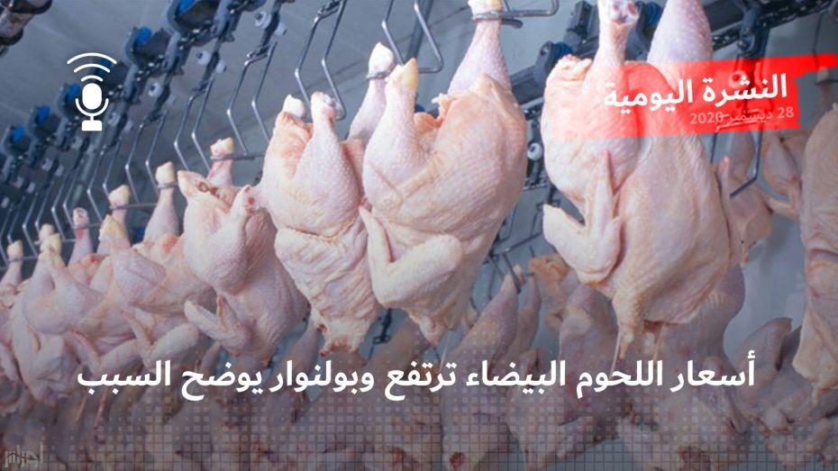 النشرة اليومية: أسعار اللحوم البيضاء ترتفع وبولنوار يوضح السبب
