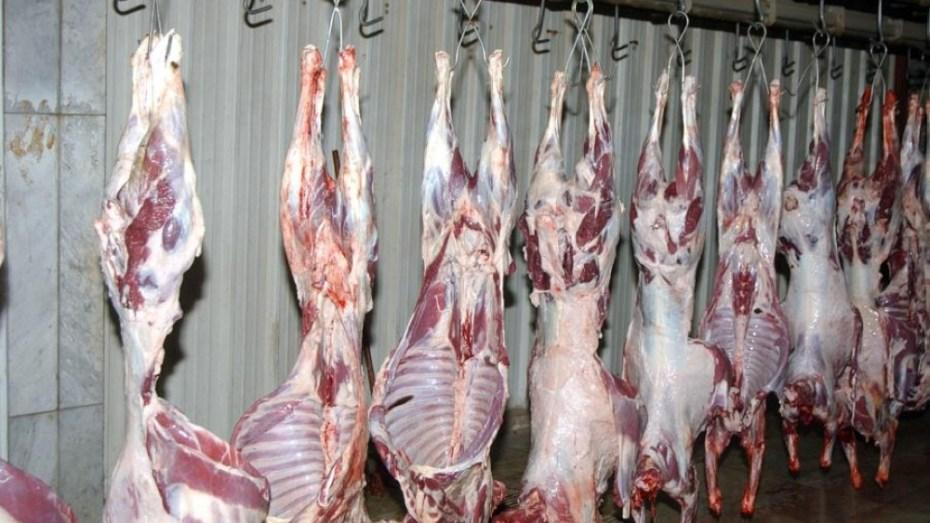 إنطلاق عملية تسويق اللحوم من الولايات الجنوبية نحو الشمال لأول مرة