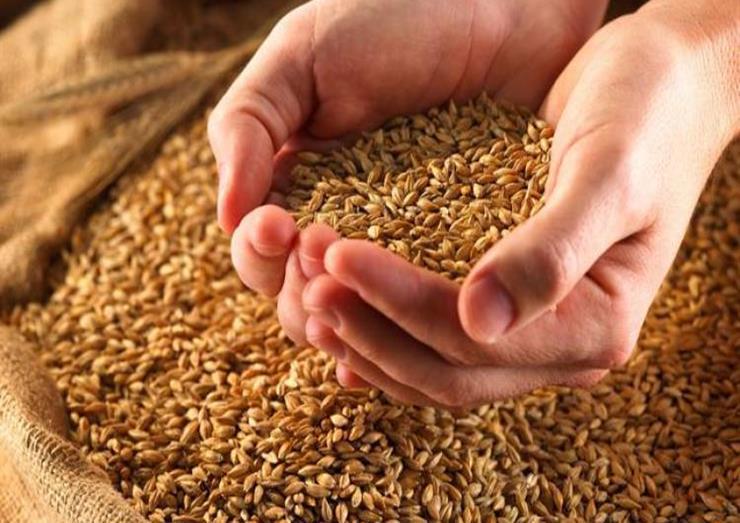 بعد قضية القمح المغشوش.. الجزائر تشتري نحو 660 ألف طن من القمح