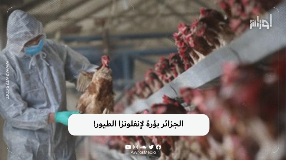 الجزائر بؤرة لإنفلونزا الطيور!