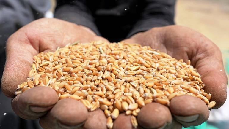 استيراد القمح حصريا للديوان الوطني المهني الجزائري للحبوب بسبب التحايل