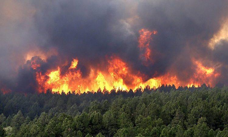اقتناء طائرات صغيرة قاذفة للمياه للتصدي لحرائق الغابات
