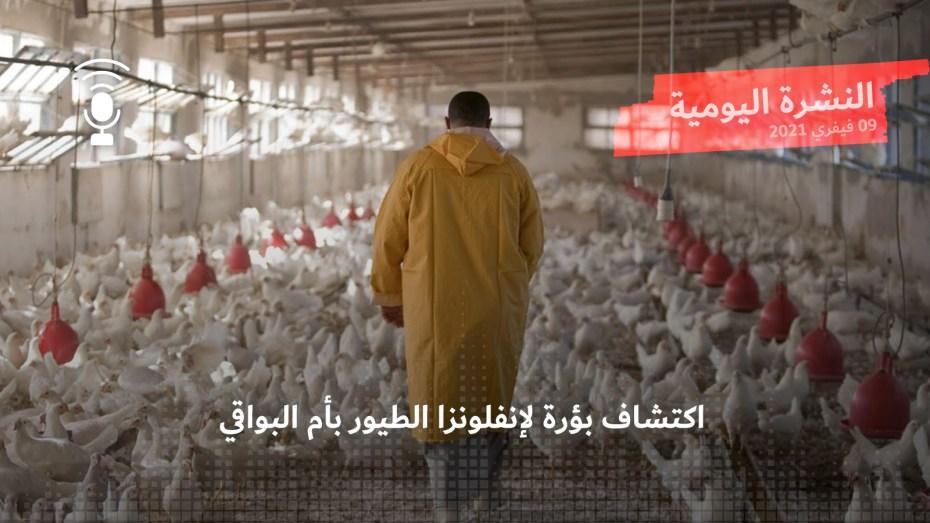 النشرة اليومية: اكتشاف بؤرة لإنفلونزا الطيور بأم البواقي