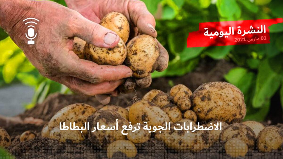 النشرة اليومية: الاضطرابات الجوية ترفع أسعار البطاطا