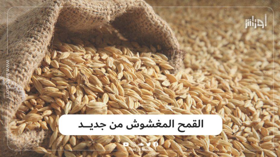 القمح المغشوش من جديد