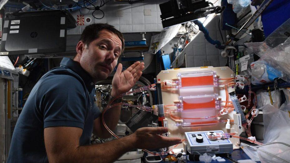 رائد فضاء فرنسي يلتقط صورا لقصبة الجزائر وخليجها من محطة الفضاء الدولية