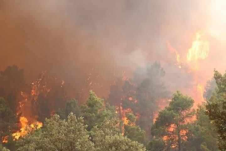 حرائق خنشلة متواصلة وتصل لغابات الأرز الأطلسي وسكان المنطقة يستغيثون