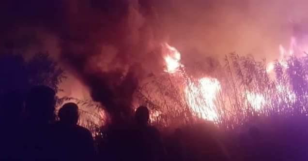 حريق يتلف مساحات كبيرة من واحات القرارة بغرداية