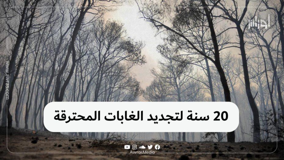 20 سنة لتجديد الغابات المحترقة